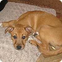 Adopt A Pet :: Pumbaa - Copperas Cove, TX