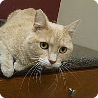 Adopt A Pet :: Twinkie - Chicago, IL