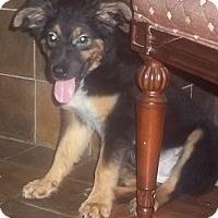 Adopt A Pet :: Flame - Staunton, VA
