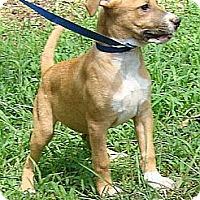 Adopt A Pet :: Bolt - Brattleboro, VT