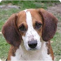 Adopt A Pet :: Roper - Prairieville, LA