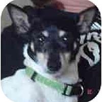 Adopt A Pet :: Morticia - Jacksonville, FL