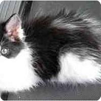 Adopt A Pet :: Torey - Irvine, CA