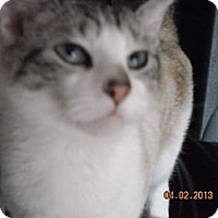 Adopt A Pet :: Victoria - Riverside, RI