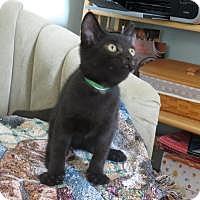 Adopt A Pet :: Barnegat - Raritan, NJ