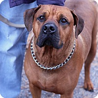 Adopt A Pet :: Gunner - Tinton Falls, NJ