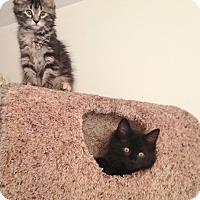 Adopt A Pet :: Cocoa - Horsham, PA