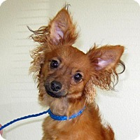 Adopt A Pet :: Jax - REDDING, CA