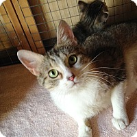 Adopt A Pet :: Luxanna - St. Charles, IL