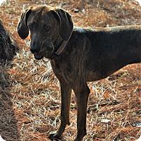 Adopt A Pet :: Daisy - ROME, NY