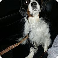 Adopt A Pet :: Max - Palatine, IL