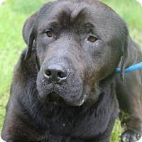 Adopt A Pet :: Manny - Waldorf, MD