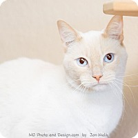 Adopt A Pet :: Jetson - Fountain Hills, AZ