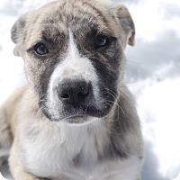 Adopt A Pet :: Ali - Parker, CO