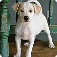 Adopt A Pet :: Noah - San Antonio, TX