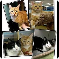 Adopt A Pet :: Roxie & Blair - Atlanta, GA