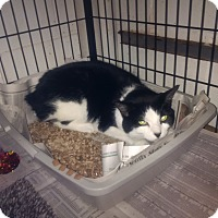 Adopt A Pet :: Ariel - North Kingstown, RI