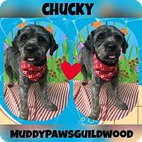 Adopt A Pet :: Chucky 3364 - Toronto, ON