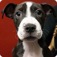 Adopt A Pet :: Ina - Rancho Santa Fe, CA