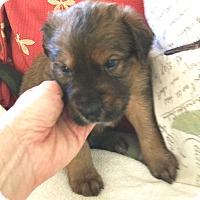 Adopt A Pet :: Austin - St Petersburg, FL