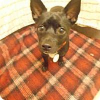 Adopt A Pet :: LEO - Upper Marlboro, MD