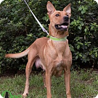Adopt A Pet :: Padme - Savannah, GA