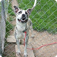 Adopt A Pet :: Tommy - Fayette, MO