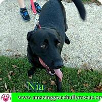 Adopt A Pet :: Nia - Pensacola, FL
