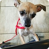 Adopt A Pet :: Betty - Las Vegas, NV