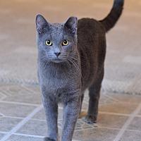 Adopt A Pet :: Remus - St. Louis, MO