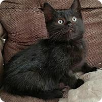 Adopt A Pet :: Tyler - Monrovia, CA