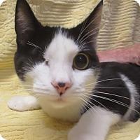 Adopt A Pet :: Yankee Doodle - Colville, WA