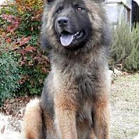 Adopt A Pet :: Chevy - Tyler, TX