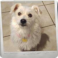 Adopt A Pet :: Elfie - Apache Junction, AZ