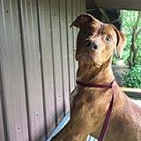 Adopt A Pet :: Red - Killian, LA