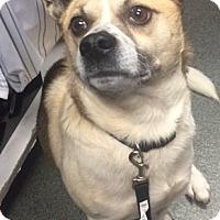 Adopt A Pet :: Maverick - Greensboro, NC