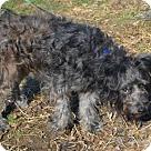 Adopt A Pet :: Mushu