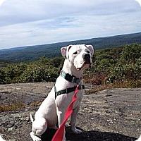 Adopt A Pet :: Paulie - Woodbridge, CT