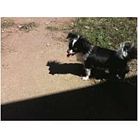 Adopt A Pet :: Tinkerbell - Everett, WA