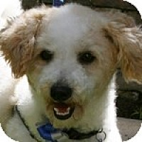 Adopt A Pet :: Colby - La Costa, CA