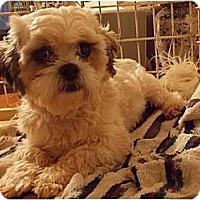 Adopt A Pet :: Douglas - Villa Rica, GA