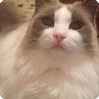Adopt A Pet :: Margot - Ennis, TX