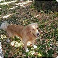 Adopt A Pet :: Ben - Denver, CO