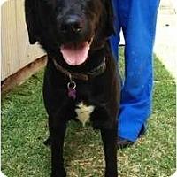 Adopt A Pet :: Piper - Richmond, VA