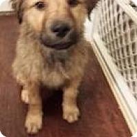 Adopt A Pet :: Bruin - New Boston, NH