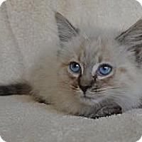Adopt A Pet :: Freddie Fur Ball - Davis, CA