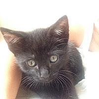 Adopt A Pet :: Pepina - Redondo Beach, CA