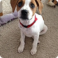Adopt A Pet :: Sally - Phoenix, AZ