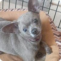 Adopt A Pet :: Flipper - Catharpin, VA