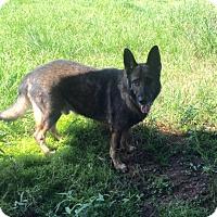 Adopt A Pet :: HAMMER - Houston, TX